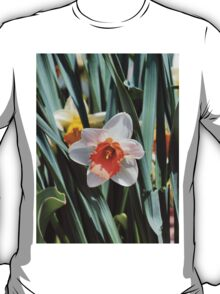 Daffodils Return!! T-Shirt