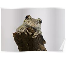 Adorable Smiling Tree Frog Poster