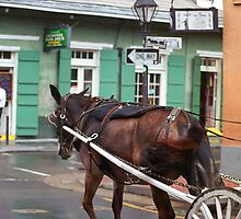 New Orleans - Bourbon Street Horse by Frank Romeo