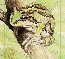 Pensive (Alpine tree frog - Litoria verreauxii alpina) by Laura Grogan