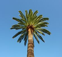 Cap Ferrat Palm Tree Cushion by Fara