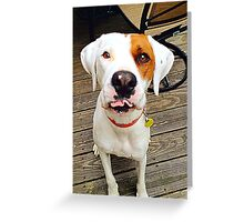 Zoey the Dog Greeting Card