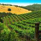 Greenfield Rolling Hills by Randy Turnbow