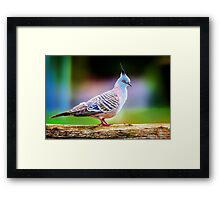 Candy Pigeon... Framed Print