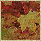 Maple Leaves by Dana Roper