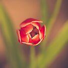 Tulip head by brandiejenkins