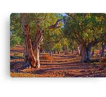 Red River Gums Canvas Print