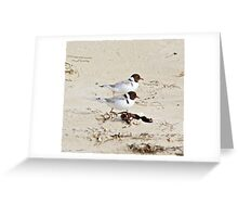 Hooded Plover Greeting Card