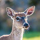 bambi by Alexandr Grichenko