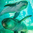 dolphins by Alexandr Grichenko