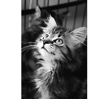 Kitten looking up (non-clothing products) Photographic Print