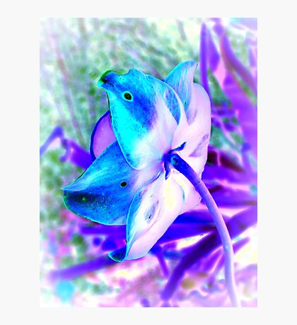 Shy Flower - Cool Colors Photographic Print