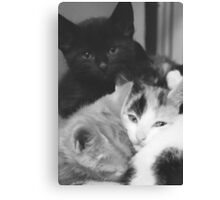 Pile of kittens (non-clothing products) Canvas Print