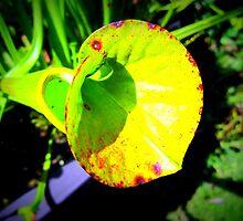 Pitcher Plant - Bright by PiscesAngel17