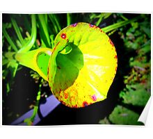 Pitcher Plant - Bright Poster