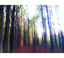 Beaming the Forest Up Photographic Print