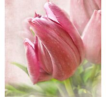 tulip i pad by vigor