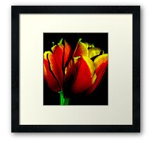 red with the golden accents 01 Framed Print