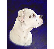 The Dog (Staffordshire Bull Terrier) Photographic Print