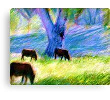 Cattle Around Bourke Canvas Print