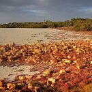 Coorong #6 by Bette Devine