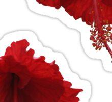 Red Hhybiscus Sticker