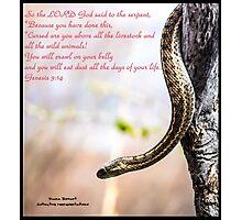 Bible Verse Genesis 3:14 Photographic Print