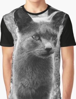 A Grey Stray: Posing for the camera Graphic T-Shirt