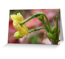 Raindrops on daffodils Greeting Card