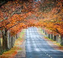 Honour Avenue by Russell Charters