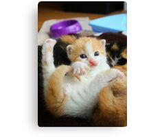 Kitten Yoga Canvas Print