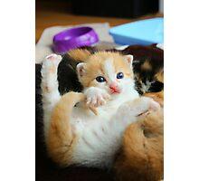 Kitten Yoga Photographic Print