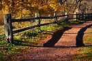 Fence along Path by Roger Passman