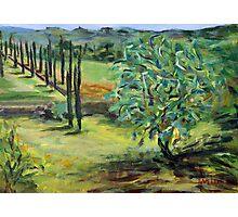 Olive Tree Photographic Print