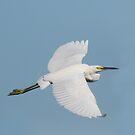 White Flight by byronbackyard
