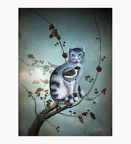 The Blue Cat Photographic Print