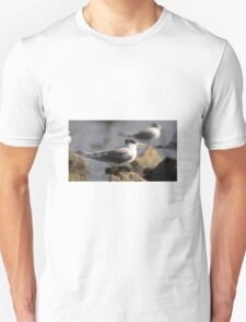 Crested Tern at Half Moon Bay, Melbourne Unisex T-Shirt