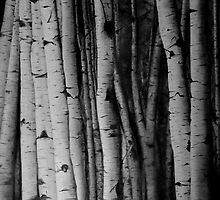 Birch by daamsie