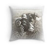Swaledale Ewes Throw Pillow
