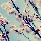 springs bloom~ by Brandi Burdick