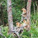 Proboscis Monkey group by Brad Francis