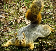 Surprise Mister Squirrel by SRowe Art