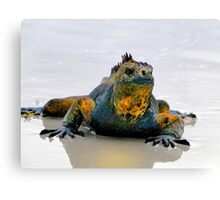 Galapagos Evolution Personified Canvas Print