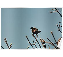 Happy Grackle Poster