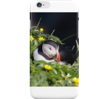 A Snoozing Puffin iPhone Case/Skin