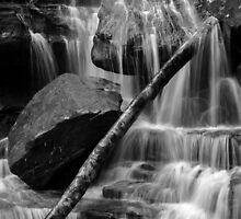 Log in Somersby Falls by Chris Allen