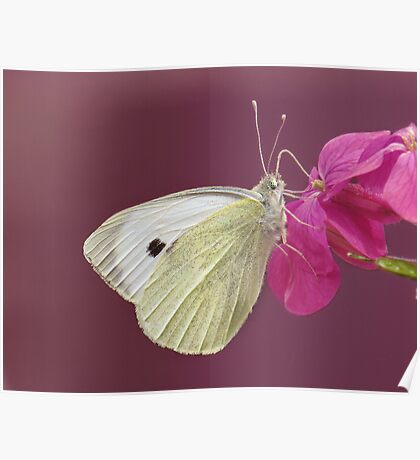 You give me butterflies, and take my breath away..... Poster