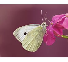 You give me butterflies, and take my breath away..... Photographic Print