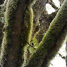 Pacific Northwest rainforest by Rainydayphotos