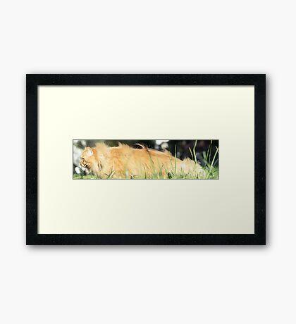 ant tiger Framed Print